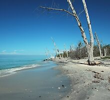 Little Manasota Key by kathy s gillentine