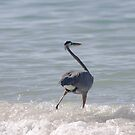 fishing the surf by kathy s gillentine