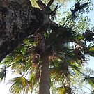 Cabbage meets Gum tree by GeoGecko