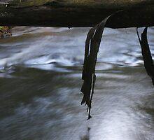 Slippery when wet by Nick Bellette