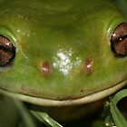 green tree frog by columboola