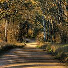 Back Road To Byng by pedroski