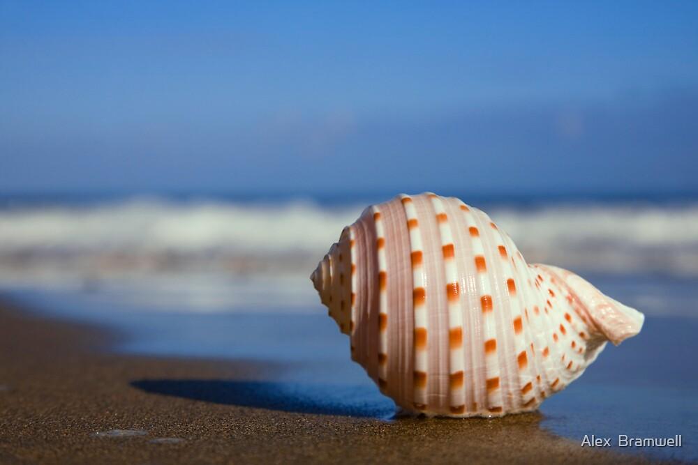 Seashell on the Seashore by Alex  Bramwell