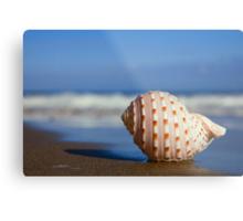Seashell on the Seashore Metal Print