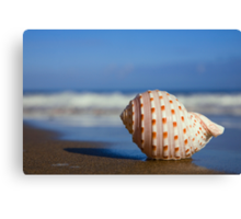 Seashell on the Seashore Canvas Print