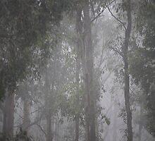 Fog by lawrencew