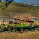 Freemantle Road Shearing Shed 001 by pedroski
