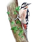 Great Spotted Woodpecker by Maureen Sparling
