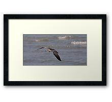 Fly by Framed Print