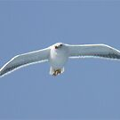 Seagull-1 by DutchLumix