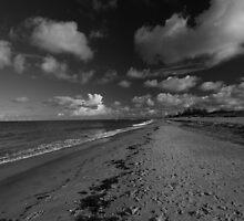 Venice Beach, Florida by kathy s gillentine