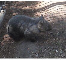 Wally Wombat Photographic Print