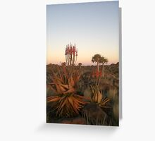 Quiver Tree Forest, Namibia Greeting Card