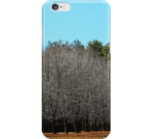 Trees of Row in Sunlight iPhone Case/Skin