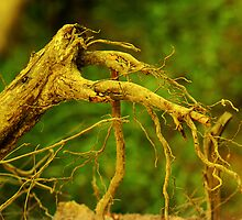 Roots by Charuhas  Images