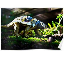 Ankylosaurus Poster