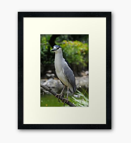 Night Thoughts Framed Print