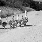 Duck Family by Slavi Barnev
