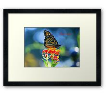 Monarch Butterfly on Scarlet Milkweed (with title) Framed Print
