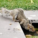 This is thirsty work, Don't you think!! by Finbarr Reilly