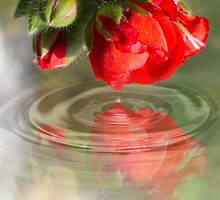 flower touch by befocus