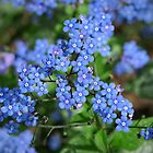 Forget-me-nots (Myosotis) by Ludwig Wagner