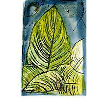 My Uganda-  Tiger Lily Photographic Print