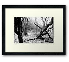 Twisted Woods in NJ Framed Print