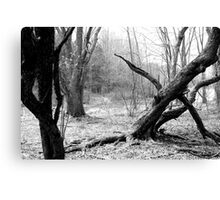 Twisted Woods in NJ Canvas Print