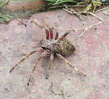 Spider by vkrivak