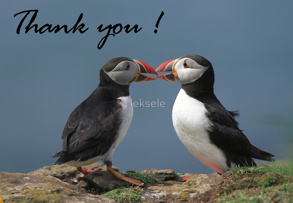 Puffins by leksele