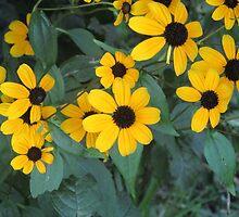Yellow Flowers by vkrivak