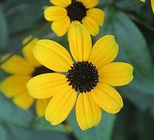 Pretty Flower by vkrivak