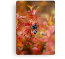 Autumn Blueberries Metal Print