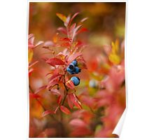 Autumn Blueberries Poster