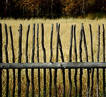 Fence 4 by Robert Meyer