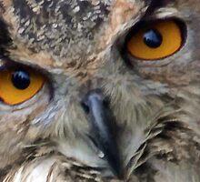 Hypnotic Eyes ............ by lynn carter