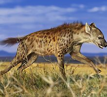 SPOTTED HYAENA 5 by owen bell