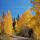 Looks like it's autumn in Utah [3] by gail anderson