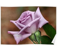 The 'BLUE MOON' a rose with exceptional beauty and elegance ! Poster