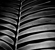 Fern abstract by scottsphotos