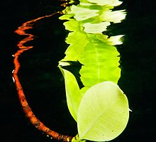 Leaf Reflection by muzy