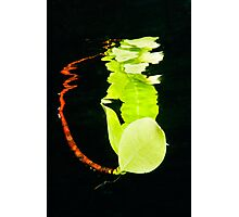 Leaf Reflection Photographic Print