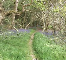 bluebell path by brucemlong