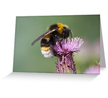 Cuckoo Bee Greeting Card