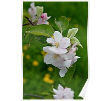 Wellwood's Spring Apple Blossoms - 6 Poster