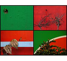 Urban Nature Collage Photographic Print