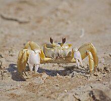 Ghost Crab by Kenneth Albin