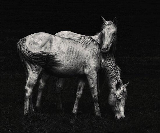 Wild Horses by Heather  Waller-Rivet  IPA