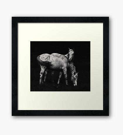 Wild Horses Framed Print